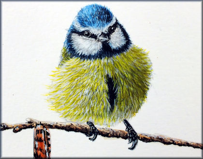 Button to all the videos linked to the Blue Tit watercolour tutorial