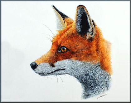 Button to all the videos linked to the Fox watercolour tutorial