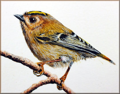 Button to all the videos linked to the Goldcrest watercolour tutorial