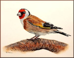 Goldfinch Detailed Watercolour Tutorial, in easy steps