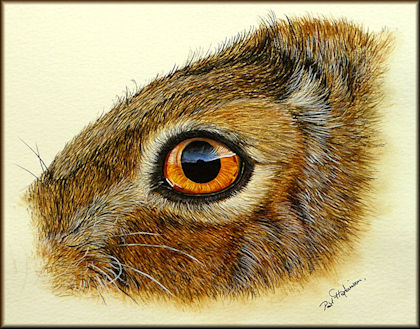Button to all the videos linked to the Hare's Eye watercolour tutorial