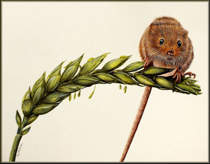 Button to all the videos linked to the Harvest Mouse watercolour tutorial