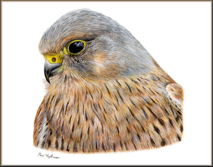 Button to all the videos linked to the Kestrel watercolour tutorial