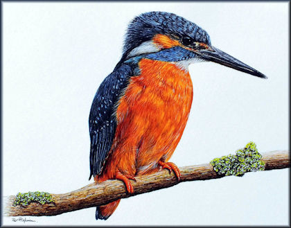 Button to all the videos linked to the Kingfisher watercolour tutorial
