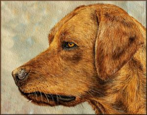 Learn to Paint a Dog in Watercolour, Detailed PDF
