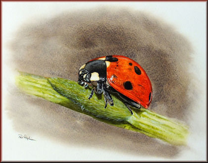 Button to all the videos linked to the Ladybird watercolour tutorial