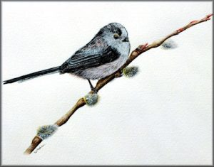 Learn to Paint in Detailed Watercolour - Long Tailed Tit Tutorial