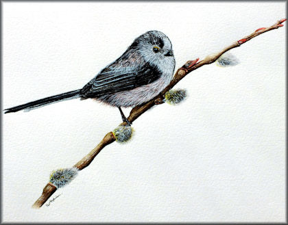 Button to all the videos linked to the Long Tailed Tit watercolour tutorial