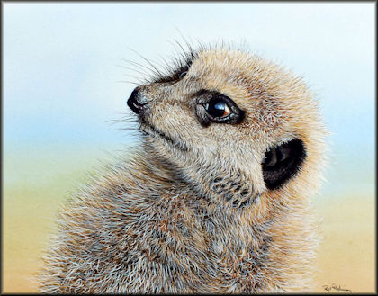 Button to all the videos linked to the Meerkat watercolour tutorial