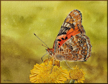 Button to all the videos linked to the Painted Lady Butterfly watercolour tutorial