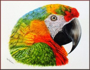 How to Paint Pets in Detailed Watercolour - Parrot PDF