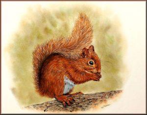 Watercolour Wildlife Painting Tutorial by Paul Hopkinson