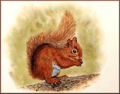 Button to all the videos linked to the Red Squirrel watercolour tutorial