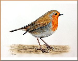 How to Paint a Robin in Watercolour, PDF Tutorial
