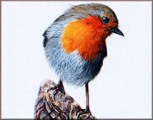 Paint a Realistic Robin in Watercolour with a Step by Step PDF