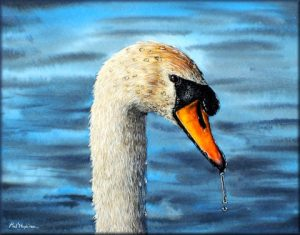 Mute Swan in Detailed Watercolour - An Original Fine Art Painting