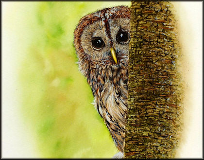 Button to all the videos linked to the Tawny Owl watercolour tutorial