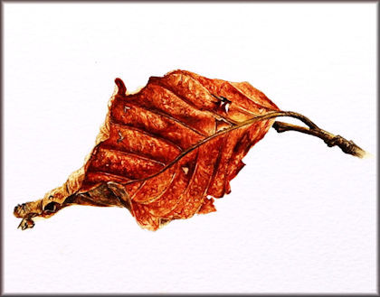 Button to all the videos linked to the Winter Beech Leaf watercolour tutorial
