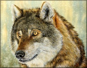 Original Watercolour Painting of a Wolf - In Realistic, Fine Art Detail