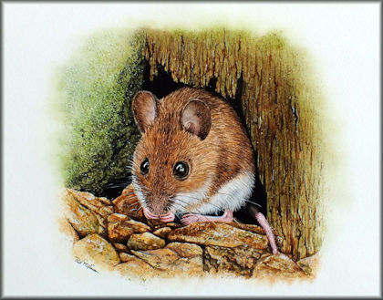 Button to all the videos linked to the Wood Mouse watercolour tutorial