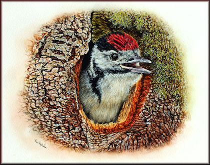 Button to all the videos linked to the Woodpecker watercolour tutorial