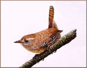 How to paint birds in watercolour - Wren PDF Tutorial