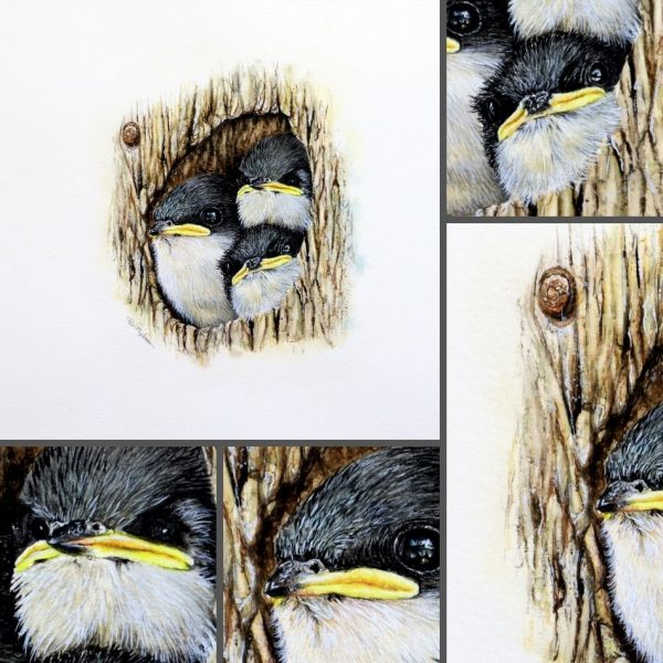 Close up photos of a tree swallows in watercolor by Paul Hopkinson