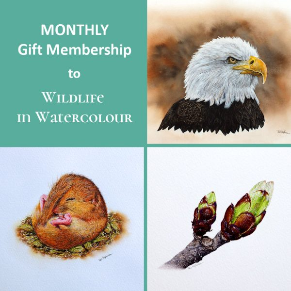 Monthly gift membership to Wildlife in Watercolour with Paul Hopkinson