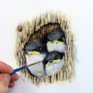 Paul Hopkinson painting tree swallows in watercolour for his online school