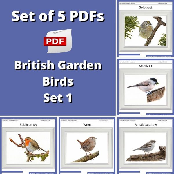 Set of 5 PDF watercolour tutorials on painting British garden birds