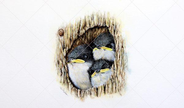 Tree Swallows in Watercolour by Paul Hopkinson