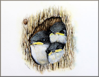 Tree Swallows in Watercolour by Paul Hopkinson button linking to the video tutorial
