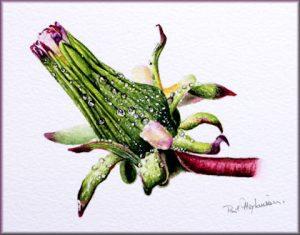 Original Botanical Watercolour Painting of a Dandelion Seed Head
