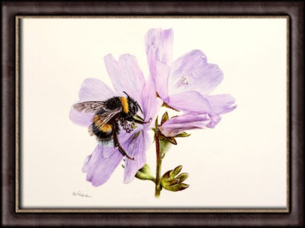 Watercolour Bumble Bee by Paul Hopkinson photographed in a frame