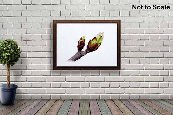 Watercolour Horse Chestnut Buds by Paul Hopkinson hanging on a brick wall