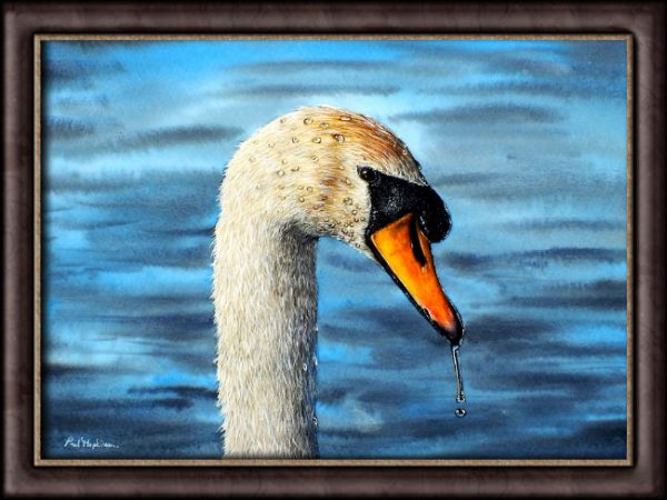 Watercolour Swan by Paul Hopkinson photographed in a frame