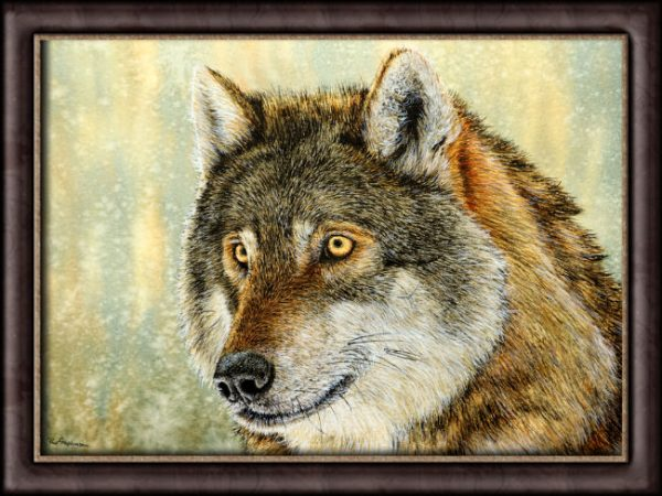 Watercolour Wolf by Paul Hopkinson photographed in a frame