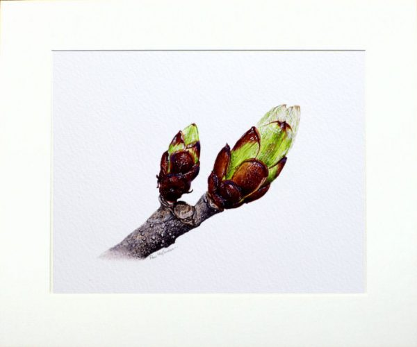 Watercolour tree buds by Paul Hopkinson in neutral mount