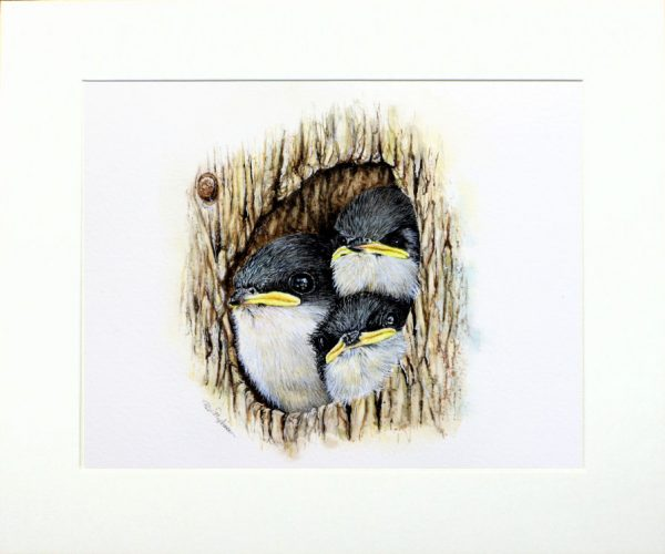 Watercolour tree swallows by Paul Hopkinson in neutral mount