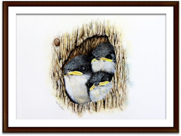 Watercolour tree swallows by Paul Hopkinson mounted and framed