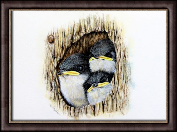Watercolour tree swallows by Paul Hopkinson photographed in a frame
