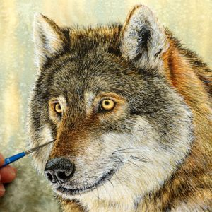 Wolf being painted in watercolour by Paul Hopkinson