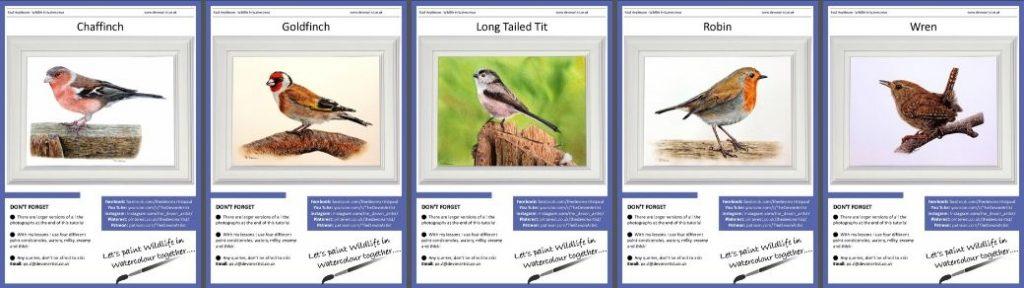 Watercolour PDF Bird Tutorials - Set 2 British Garden Birds