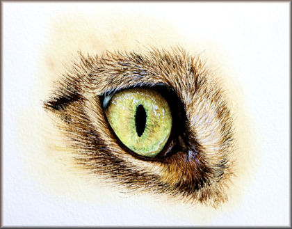 Button linking to a tutorial on painting a cat's eye in watercolour by Paul Hopkinson