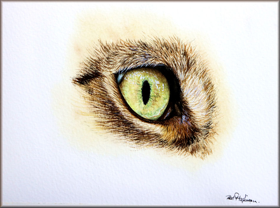 Cat's Eye painted in watercolour by Paul Hopkinson for a paint along tutorial