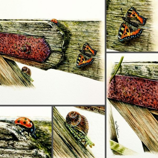 Close up photos of an old wood gate in watercolor by Paul Hopkinson