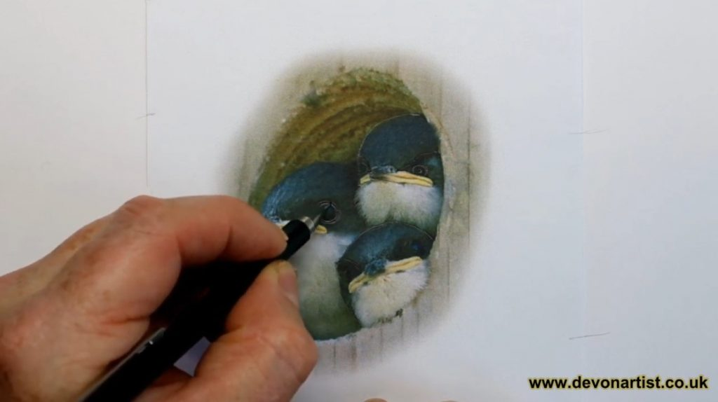 Beginner's Guide to Drawing Birds. How to trace an image by Paul Hopkinson