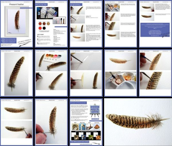 Overview of a PDF tutorial on painting a pheasant feather in watercolor