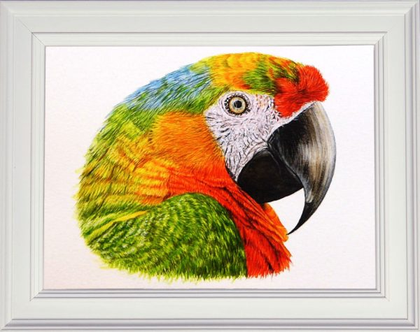 Parrot painted in detailed watercolour displayed in a white frame