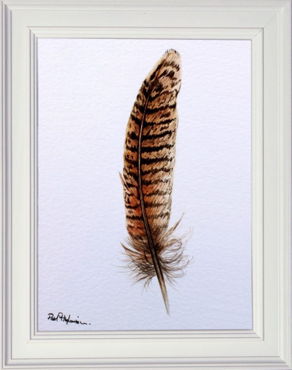 Pheasant feather in watercolour displayed in a white frame